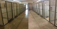 Ohio Shelter Holds Wildly Successful Adopt-A-Thon, Leaving Their Facility Completely Empty