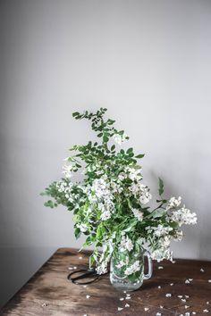 Amanda Nolan Booker | foraged wild roses