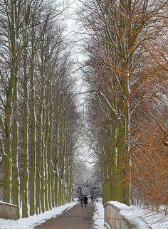 Trinity College snow, Cambridge