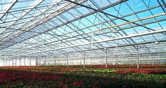Widespan Glasshouses | Bridge Greenhouses Wide span structures, for the specialist grower, or for garden centres etc. can be provided with Galvanised steel, or enclosed Aluminium gutters.  The wide span greenhouse provides very large areas free from the clutter of supporting posts. The are generally supplied when a clear open space in the greenhouse is required. Glass House, Galvanized Steel, Homesteading, Europe, Greenhouses, Clutter, Iceland, Fashion Inspiration, Bridge