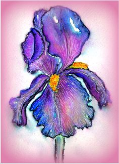 IRIS I wondered if I could paint an Iris with the Elegant Writer Pen Watercolor.:) I also used a white gel pen and a ballpoint. Pen And Watercolor, Watercolor Flowers, Watercolor Paintings, Watercolors, Iris Painting, Tole Painting, Caran D'ache, Pen Art, Crayon