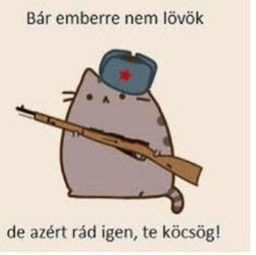 Nyan Cat, Pusheen Cat, Grumpy Cat, Idiots Everywhere, Funny Moments, Cute Wallpapers, Puns, The Funny, Haha