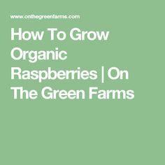 How To Grow Organic Raspberries | On The Green Farms