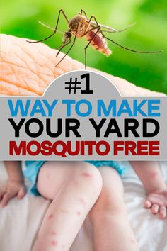 Backyard Patio, Backyard Landscaping, Diy Pest Control, Mosquito Trap, Mosquitos, Do It Yourself Jewelry, Mosquito Repelling Plants, Outdoor Projects, Things To Know