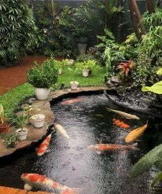 A water garden and pond are absolutely wonderful additions to any backyard landscaping. However, when you first set out to create your water garden, you will quickly realize that it is going to take a lot of work to create… Continue Reading → Fish Pond Gardens, Koi Fish Pond, Koi Ponds, Fish Garden, Zen Gardens, Water Falls Garden, Garden Plants, Small Fish Pond, Fish Pool