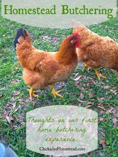 Homestead Butchering: Thoughts on our first butchering - Chickadee Homestead: