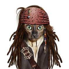 Jack Sparrow cat
