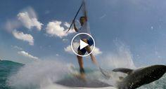 Paddle Boarder Tem Surpresa Da Sua Vida Ao Encontrar Tubarão