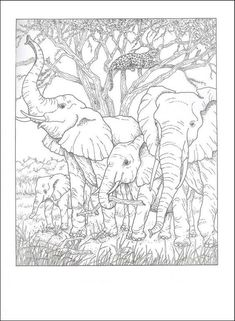 Super wood burning elephant coloring pages Ideas Dover Coloring Pages, Printable Adult Coloring Pages, Animal Coloring Pages, Coloring Books, Elephant Colour, Elephant Art, Ciel Art, Animal Drawings, Art Drawings