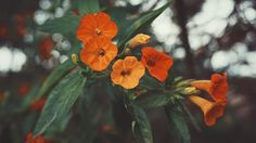 You see what you want to see. #flower #green #orange #nature #club #family #life #bestoftheday #botd #vscocam #vsco #wish