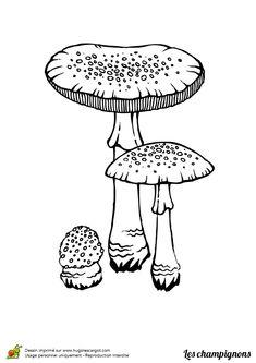 Coloriage champignon amanite tue mouche sur Hugolescargot.com - Hugolescargot.com