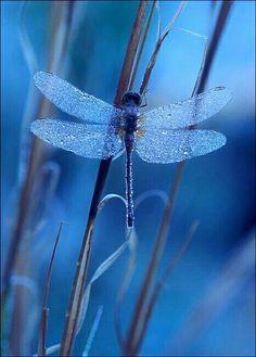 Dragonfly by Patrick Zephyr