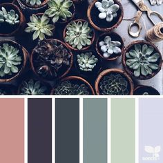 today's inspiration image for { succulent tones } is by @cherfoldflowers ... thank you, Caroline, for another gorgeous #SeedsColor image share!