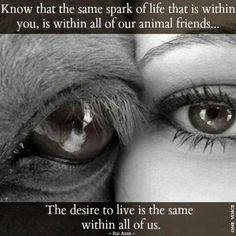 Animals have souls, can feel pain, and can feel emotions just like humans! Humans need to take this into account. Animal abuse needs to stop! How would you like it if the animals a used you? That's how the animals feel! Horse Quotes, Dog Quotes, Animal Quotes, Save Animals Quotes, Animal Cruelty Quotes, Smart Quotes, Calm Quotes, Life Quotes, Yorkies