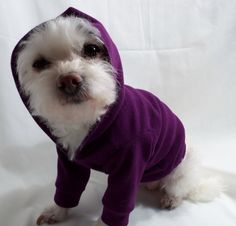 Dog Hoodie by RockinDogs on Etsy