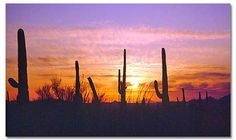 Sunset with Saguaro Cactus
