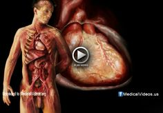 Medical Education: How to Examine The Cardiovascular System – Medical Videos Medical Sites, Education, Videos, Onderwijs, Learning