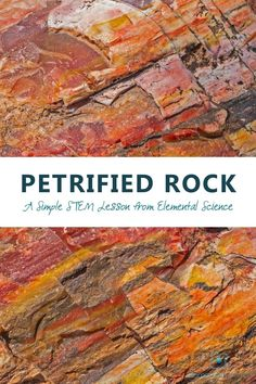 Did you know that petrified rock is actually a fossil? Come learn more about petrified rock and get a simple STEM activity on how to make a petrified sponge. Steam Activities, Science Activities, Fun Stuff, Stuff To Do, Spring Projects, Nature Study, Student Learning, Science And Technology, Mathematics