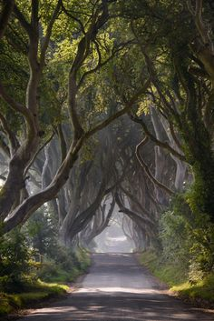 """""""Dark Hedges Mist Clearing"""" by Andy Gibson on 500px ~ This was taken on a road in Northern Ireland. The many trees that are depicted in this photo are beech trees."""
