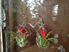 NEW DESIGN Pair of Living Air Plant Earrings by kambra on Etsy, $12.00