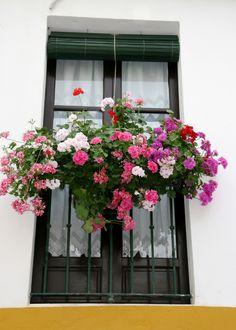 Window Box / Seville, Andalucia, Spain