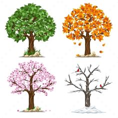 Buy Four Seasons by mari_pazhyna on GraphicRiver. Tree in four seasons – spring, summer, autumn, winter. Isolated on white background. Each tree i. Four Seasons Painting, Four Seasons Art, Different Seasons, Four Seasons Nursery, Summer Trees, Spring Tree, Orquideas Cymbidium, Buch Design, Tree Illustration