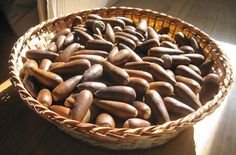 """""""Using ACORNS as food pretty much falls into three categories: Eating acorns as nuts (they are a lot like chestnuts), making acorn flour, or cooking in acorn oil. Permaculture, Eating Acorns, Edible Wild Plants, Gland, Survival Food, Survival Stuff, Survival Kits, Homestead Survival, Wild Edibles"""