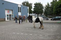 Het werken met paard geeft veel inzicht binnen de groep.