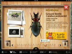 Appysmarts - Meet the Insects: Forest Edition Educational Websites, Educational Technology, Science And Technology, Ipod Touch, Ipad, Learning Apps, Projects For Kids, Garden Projects