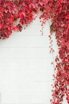 vines on a white concrete wall make a frame by Deirdre Malfatto - Stocksy United Flower Iphone Wallpaper, Flowery Wallpaper, Flower Background Wallpaper, Pastel Background, Cute Wallpaper Backgrounds, Pretty Wallpapers, Flower Backgrounds, Aesthetic Iphone Wallpaper, Colorful Wallpaper
