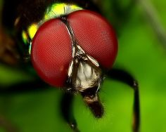 My Eyes In My Compound by VicWasHere ::, via Flickr