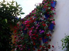 Muro patio Cordobes