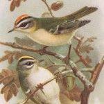 Birds on Oak Tree Branch
