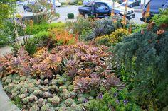 Galeria de imagens de lindos jardins de suculentas de David Feix Landscape Design.