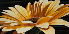Dennis Magnusson  Yellow Gerbera