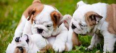 Cuidados importantes para a saúde dos filhotes! | Blog do CTI Veterinário