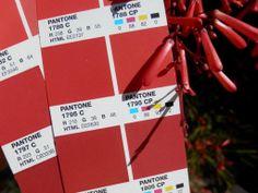 PMS 1795 CP Pms Colour, Pantone, Colours