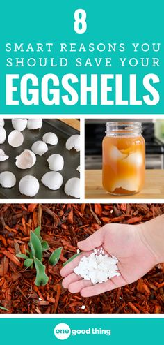Gardening Compost Eggshells make a great addition to your compost pile, but that's not all they can do! Check out these 8 brilliant things you can do with your empty eggshells. Health Remedies, Home Remedies, Egg Shell Uses, Container Gardening, Gardening Tips, Clean Pots, Making Life Easier, Garden Pests, Green Cleaning