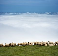 """""GORBEA SIMPLE and INFINITY"" / ""GORBEA SIMPLE e INFINITO"" "" by Juan PIXELECTA, via 500px. In heaven is...sheep! Haha..."