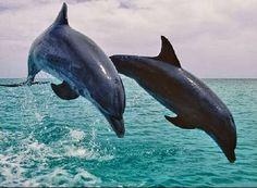 Conheça os animais mais velozes do planeta. (9894)