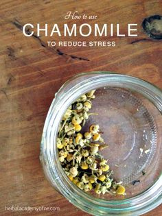How to Use Chamomile to Reduce Stress (Includes Recipes)