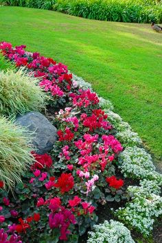 Flower bed border idea - alyssum, begonia and ornamental grass - great color combination