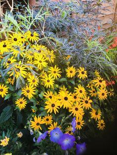 Small Narrow Garden Ideas, Plants, Plant, Planets