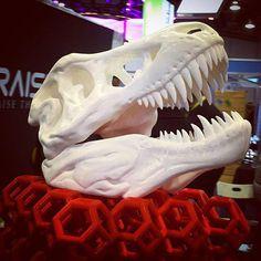 @Regrann from @torchvenom: #ces #ces2016 #ces2016tech #3dprinting 3D printed Dino bones! - via #Regrann by aveldrive