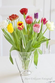 Mari Eriksson - rarely can you buy such a mixture of tulips in a bunch, but I love the short vase they are in (and how the lower leaves aren't trimmed.)