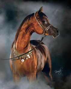 ABD Justinian Rough Justice x Magnums Mai Tai Photo by Brandy Phillips