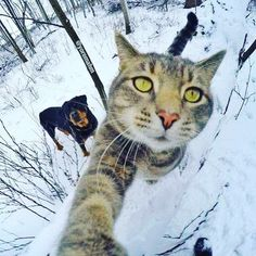 We have no idea what's happening but it seems dangerous.  Zoemspray is a water repellent spray coating for all electrical items, be prepared for those accidents waiting to happen, even the ones no one will ever believe.    www.zoemspray.com    #photography #wetweather #waterdamage #wetphone #smartphone #waterproof #snowday #catselfie #selfie #waterresistent #technology #splashproof #moisture #techaddict