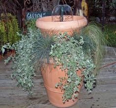 Love fountains - never thought to use ornamental grasses with ivy. printed article so wouldn't lose