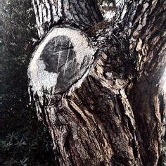 Dal taglio di un ramo escono facce. Robe insolite.  #puntaala #igers #photo #cool #iphoneonly #nature #life #beautiful #instagood #Summer