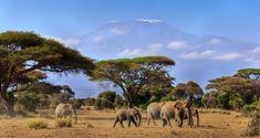 Kenya And Tanzania Tours Cuba Photography, People Photography, Animal Photography, Street Photography, Landscape Photography, Nature Photography, Photography Ideas, Okavango Delta, Motocross Photography